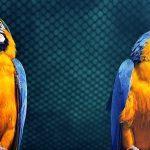 Papugaria – fajne czy niebezpieczne miejsce?